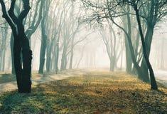 aleja mgłowa Fotografia Royalty Free
