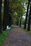 Aleja między drzewami w parku Zdjęcie Stock