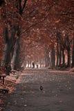 Aleja park, gołąbka w przedpole Zdjęcia Royalty Free