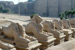 Aleja sfinksy w dzielnicie ponowny (Karnak Świątynny kompleks Luxor, Egipt,) fotografia royalty free