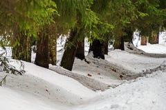 Aleja starzy drzewa odchodowy Pavlovsk Park fotografia royalty free
