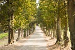 aleja Tuscany Obrazy Royalty Free