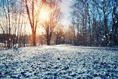 Aleja w śnieżnym ranku Fotografia Royalty Free