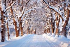 Aleja w śnieżnym ranku Zdjęcie Stock