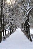 Aleja w śniegu z słońca jaśnieniem Zdjęcie Stock