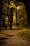 Aleja w jesień parku w opóźnionym wieczór zdjęcia stock