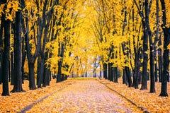 Aleja w jesień parku Obraz Royalty Free
