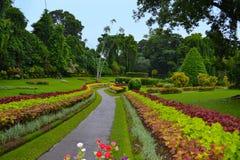 Aleja w Królewskich ogródach botanicznych, Kandy Sri Lanka Fotografia Royalty Free