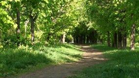 Aleja w lato parku zbiory