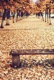 Aleja w miasta i koloru żółtego jesieni liściach jesień błękitny miasta ulistnienia krajobrazu nieba drzewa yellow obrazy royalty free