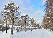 Aleja w miasto parku w zimie Fotografia Royalty Free