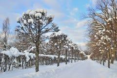 Aleja w miasto parku w zimie Zdjęcie Stock