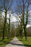 Aleja w parku, Bavaria Fotografia Stock