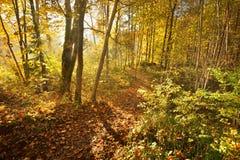 Aleja w parku podczas złotej jesieni Obrazy Stock
