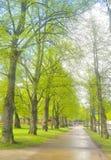 Aleja w parku w Lappeenranta Fotografia Royalty Free