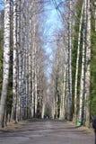 Aleja w parku w wiośnie Obrazy Stock