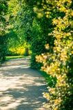 Aleja w parku z świeżą wiosną opuszcza jarzyć się w sinset li Obrazy Royalty Free