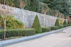 Aleja w parku z sculpted krzakami Zdjęcia Royalty Free