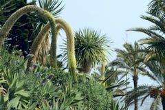 Aleja w parku z zielonymi drzewkami palmowymi i egzot roślinami na wyspie madera przeciw niebu obraz stock