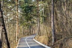 Aleja w sosnowym lesie dla jogging i jeździć na rowerze Obrazy Stock