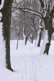 Aleja w zimie Obrazy Royalty Free