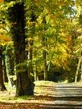 Aleja z deciduous drzewami na pogodnym jesień dniu Fotografia Stock
