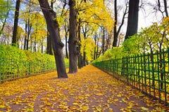 Aleja z spadać żółtymi liśćmi klonowymi na ścieżce w lecie Gard Obrazy Stock