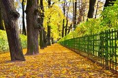 Aleja z spadać żółtymi liśćmi klonowymi w jesieni w lat dziąsłach Obrazy Royalty Free