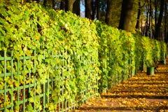 Aleja z spadać liśćmi zaświecał słońcem w jesieni w lecie Zdjęcie Royalty Free