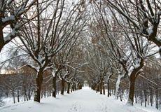 Aleja zima drzewa Zdjęcia Royalty Free