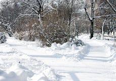 Aleje w zima - SUROWY format Zdjęcie Royalty Free