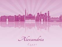 Aleksandria linia horyzontu w purpurowej opromienionej orchidei Obraz Stock