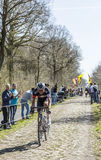 Aleksejs Saramotins w lesie Arenberg- Paryski Roubaix 201 Zdjęcie Stock