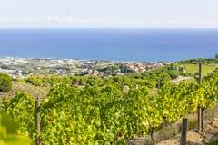Alella. Spain. Vineyards of the Alella wine region in the vicinity of Barcelona on the Mediterranean Sea Royalty Free Stock Photo