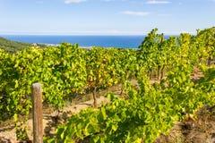 Alella. Spain. Vineyards of the Alella wine region in the vicinity of Barcelona on the Mediterranean Sea Stock Image