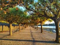 Alemania, Bonn, río foto de archivo libre de regalías