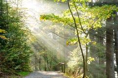 Alemania, bosque bávaro Imagen de archivo