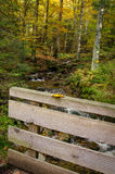 Alemania, bosque bávaro Fotografía de archivo
