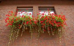 Alemania, Colonia, flores debajo de la ventana Imagen de archivo