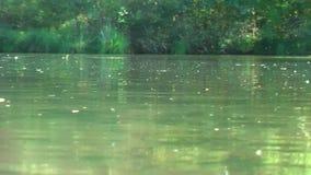 alemania Reserva de naturaleza Biotopo Vida en el agua almacen de video