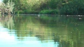 alemania Reserva de naturaleza Biotopo Vida en el agua almacen de metraje de vídeo