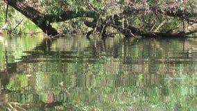 alemania Reserva de naturaleza Biotopo Vida en el agua metrajes