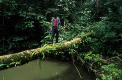 alen monte park narodowy zdjęcia royalty free