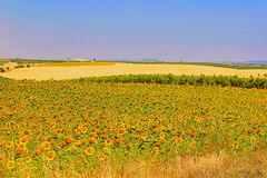 Alentejo colours of summer stock photography
