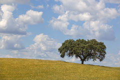 Alentejo Royalty Free Stock Image