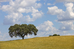 Alentejo Royalty Free Stock Photo