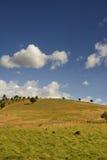 Alentejo landscape. Typical landscape of Alentejo, Portugal Royalty Free Stock Image