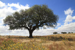 Alentejo plain Stock Photos