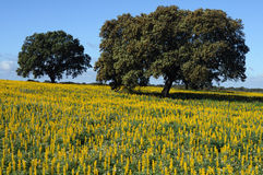 Alentejo-Portugal Royalty Free Stock Photo