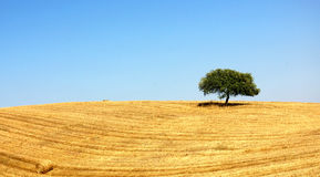 Alentejo, Portugal. Typical landscape of the Plain of the Alentejo Stock Image